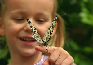 Экскурсия в Парк бабочек (Эмпуриабрава)