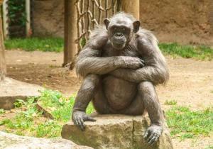 Экскурсия для детей в Зоопарк Барселоны